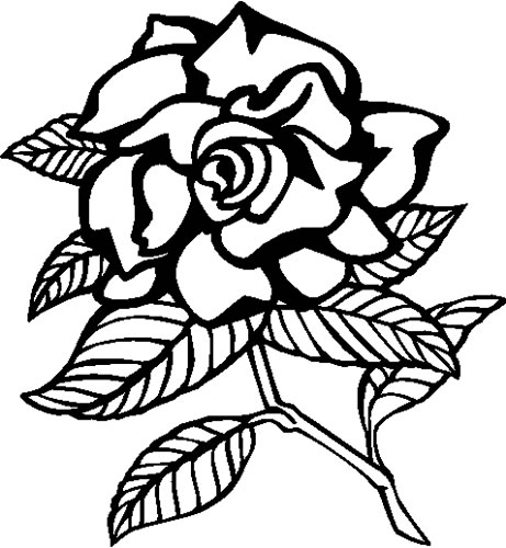 Gardenia Decals And Stickers The Home Of Quality Decals
